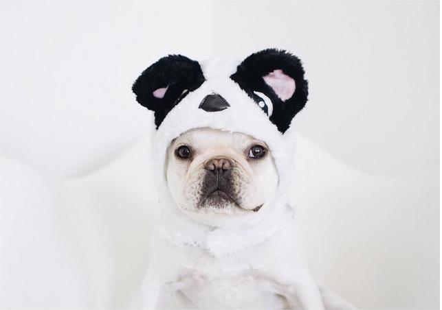 Funny dog instagram
