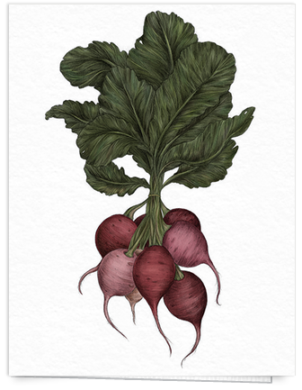 hand painted beet card