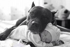 adorable-baby-and-dog-photo-idea