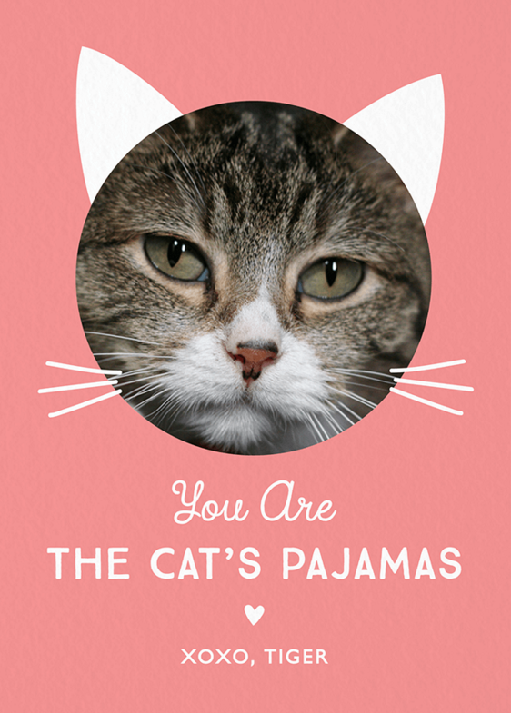 Cute Custom Photo Cat Valentines Day Card