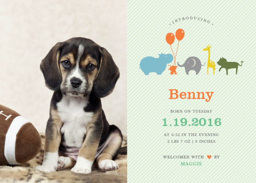 From Birth Announcements To Puppy Announcements. Free Youtube Banner. Doodle For Google Template. Family Reunion Flyer Template. Student Of The Week Poster. Free Birthday Invitation Templates. Utility Bill Template Pdf. Personal Business Cards Template. Good Web Developer Resume Sample