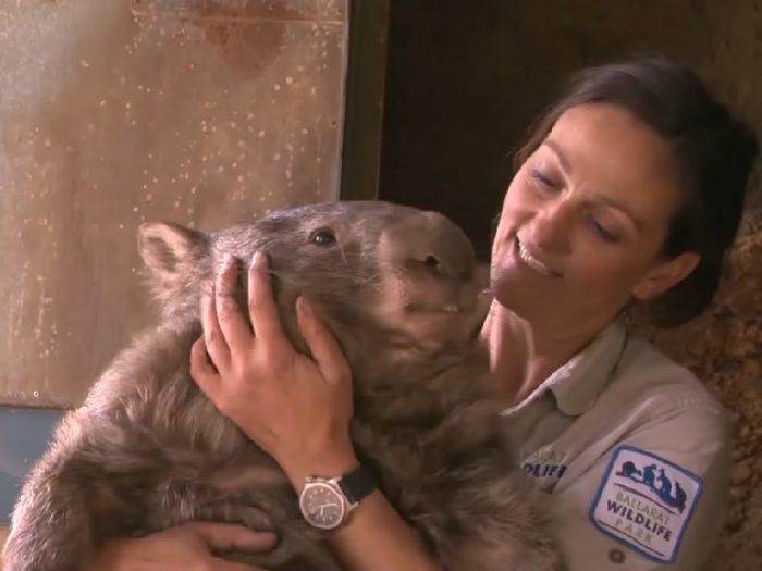 patrick-the-wombat-700x525