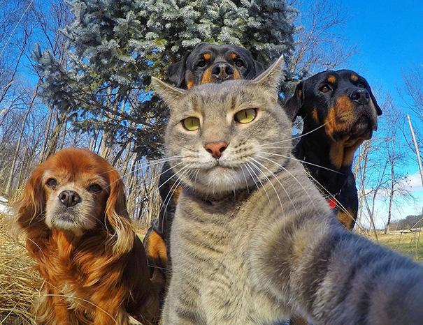 animal_selfies