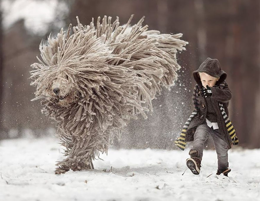 kids-play-big-dogs-photography-andy-seliverstoff-4