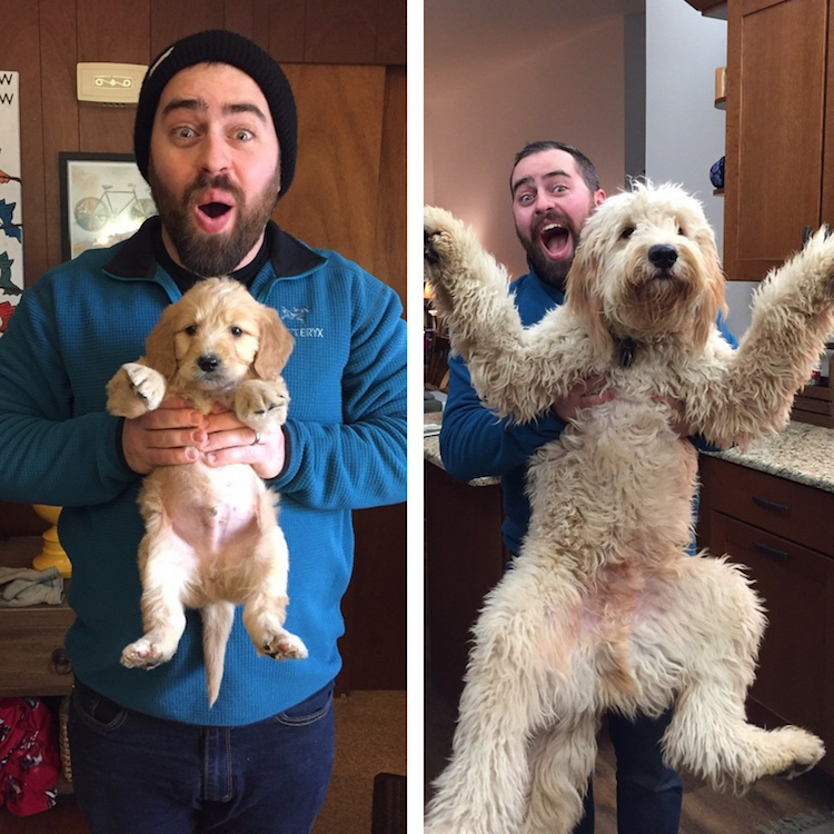 puppies-who-are-all-grown-up-1-1