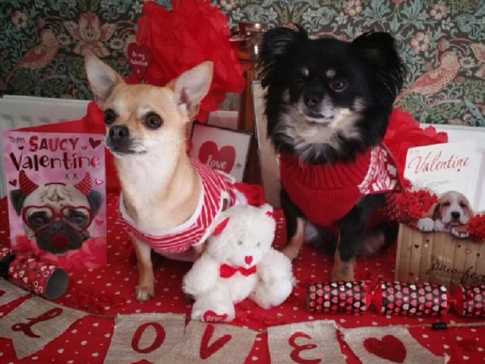 dogs-on-valentines-day-700x525