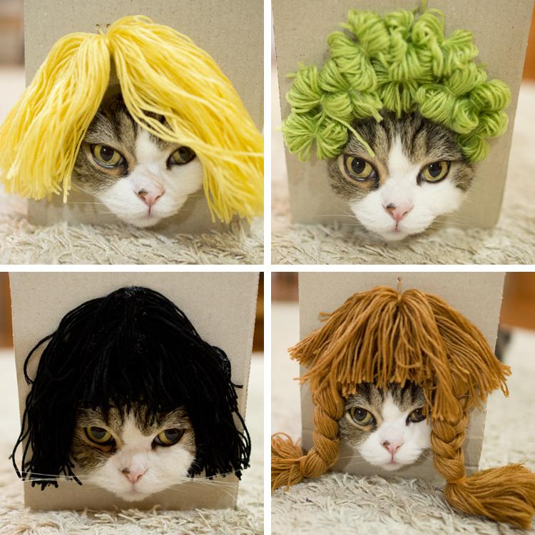 cat_wig