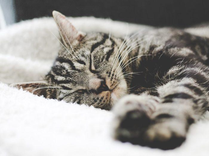 cat-cuddler-700x525
