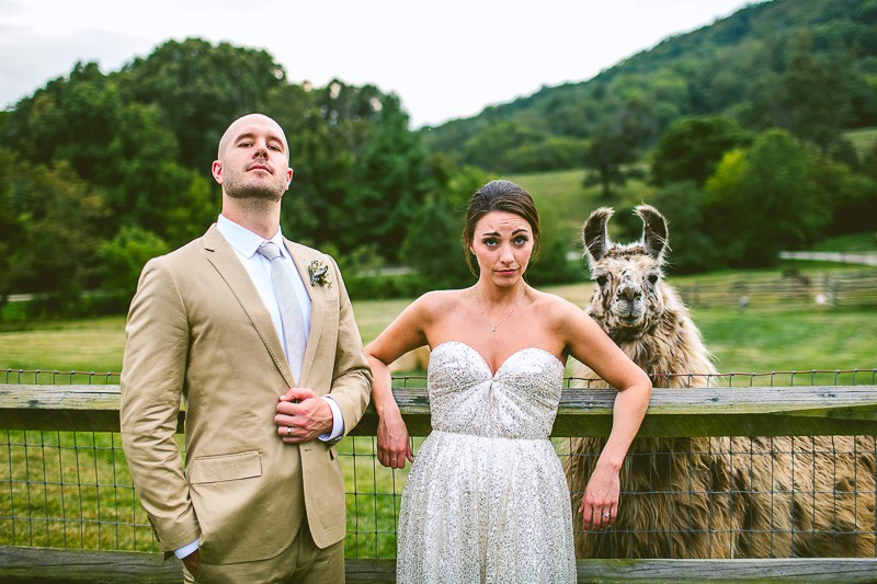 carolyn-scott-snarky-llama