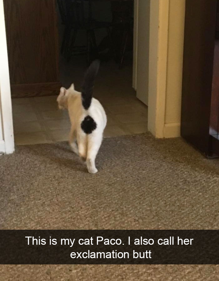 hilarious-cat-snapchats-114-594a3b772ca31__700