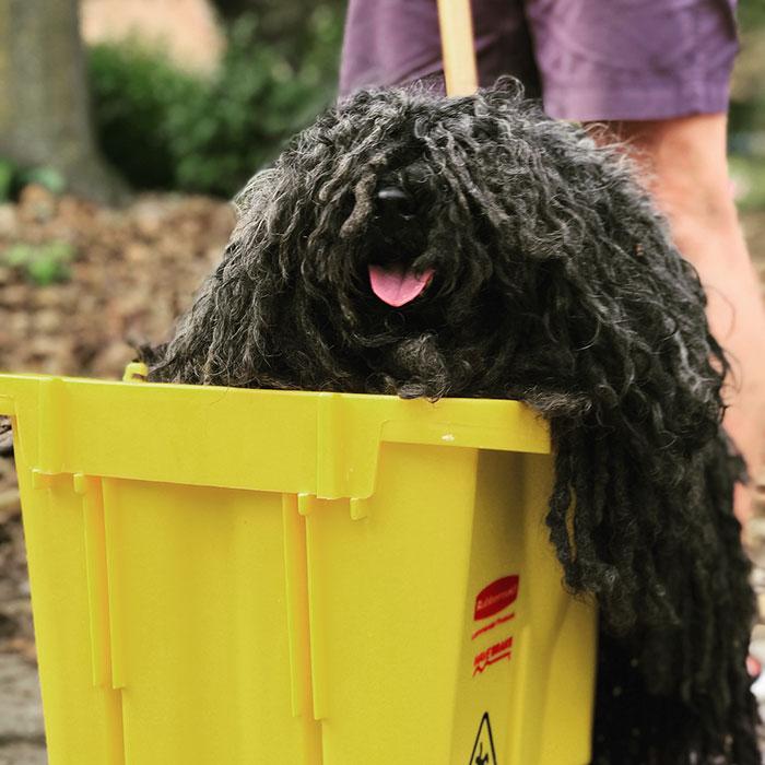 dog-mop-halloween-costume-mainstrasse-paw-rade-1