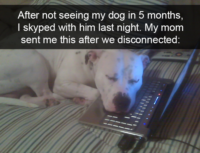 funny-dogs-photos-snapchats-42-5a9e42ec3f286__700