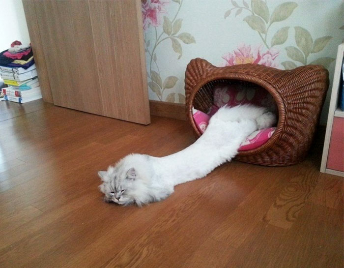 funny-liquid-cats-if-it-fits-i-sits-111-5aa7d82ed20cb__700