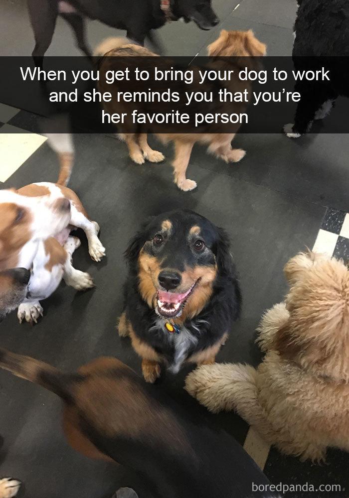 funny-pics-dogs-snapchat-21-5b2e776df1b9c__700