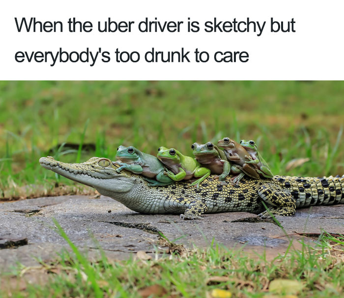 animals-using-uber-memes-6-5b4310e523ec2__700