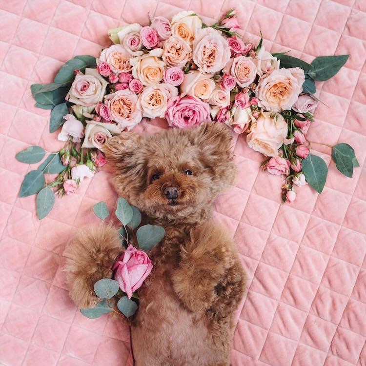 cute-dog-ps-ny-10