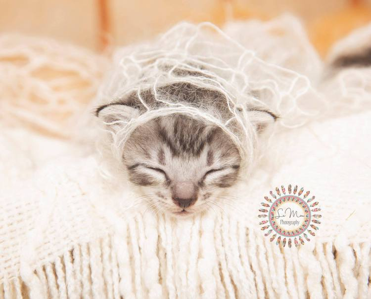 heather-lamon-newborn-kitten-photography-5