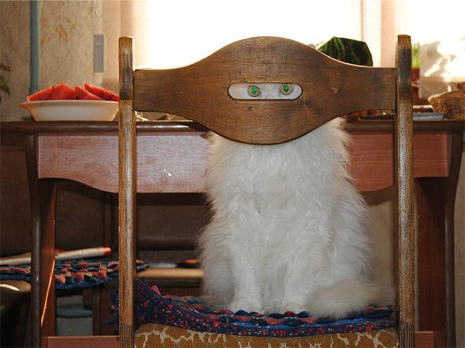 ninja-cats1