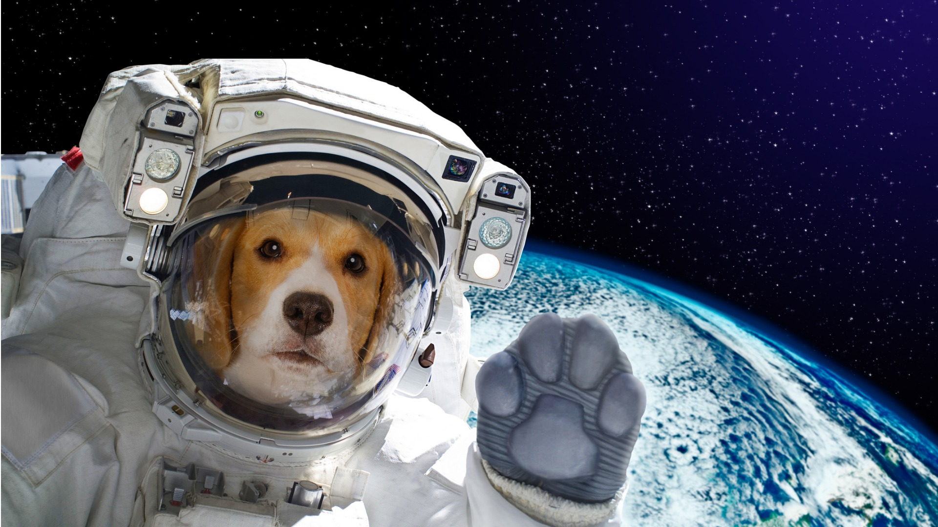 portrait-of-a-dog-astronaut-in-space-on-background-of-the-globe-of-picture-id898916798 (1)
